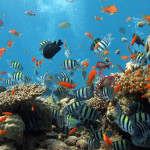 Coral_reef_1680x1050-qud1pj