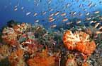 Komodo Island Reef