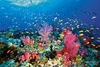 Coral Reef - Fiji